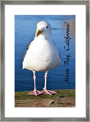 Morro Bay Seagull Framed Print by Barbara Snyder