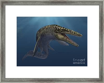 Mosasaurus Hoffmanni Swimming Framed Print