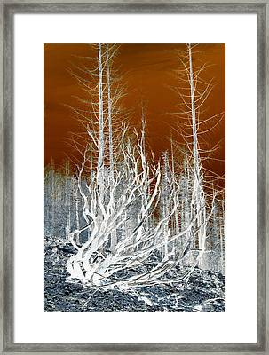 Moses      Up On Hwy 2509 Framed Print by Marie Neder