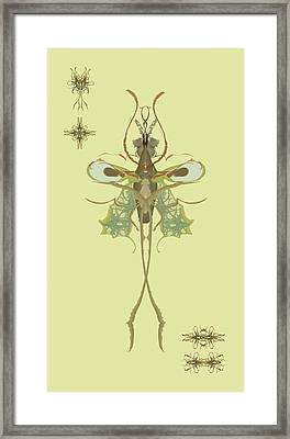 Mosquito Specimen Framed Print