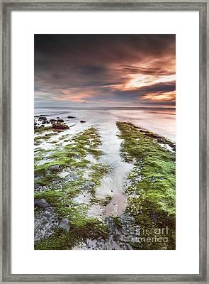 Moss And Sunset Framed Print