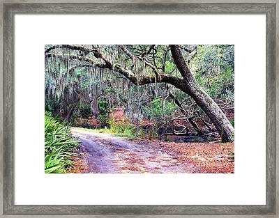 Moss Covered Live Oak Framed Print by Thomas R Fletcher