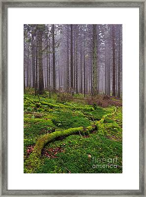 Moss Covered Log In Misty Forest Framed Print by Richard Thomas