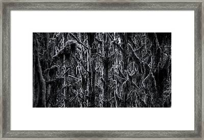 Moss Covered Trees Black And White Framed Print by Pelo Blanco Photo
