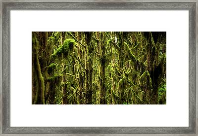 Moss Covered Trees Framed Print by Pelo Blanco Photo