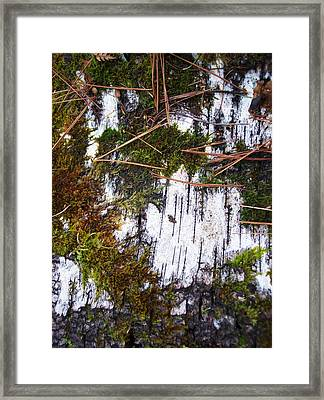 Moss On Birch I Framed Print by Anna Villarreal Garbis