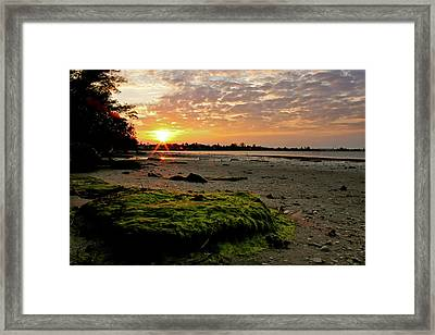 Moss On The Beach Framed Print by Angie Wingerd