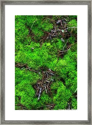 Moss On The Hillside Framed Print by Mike Eingle