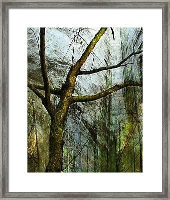Moss On Tree Framed Print by Ken Walker
