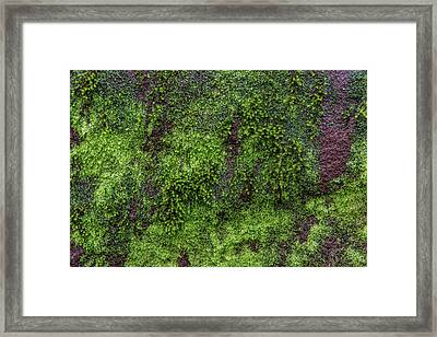 Moss Rock Framed Print by Randy Walton