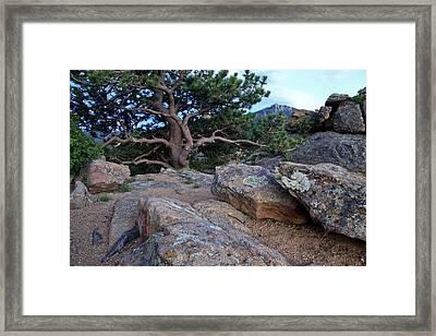 Moss Rocks And A Tree Framed Print by James Steele