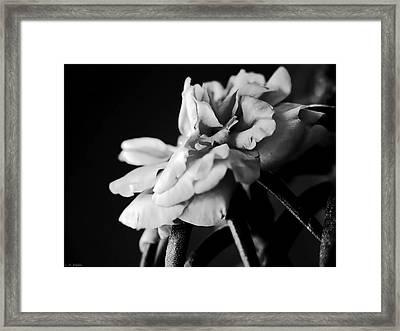 Moss Rose I Framed Print