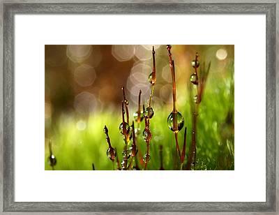 Moss Sparkles Framed Print
