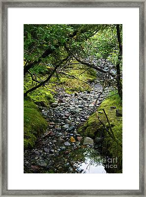Moss Stream Framed Print