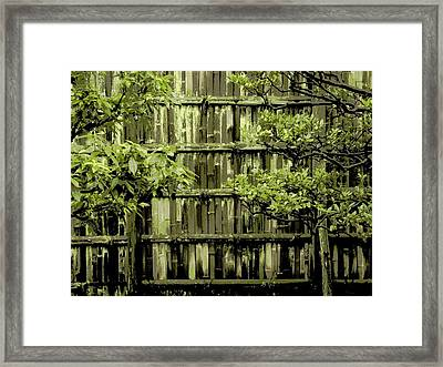 Mossy Bamboo Fence - Digital Art Framed Print
