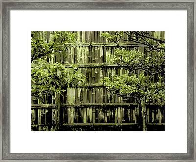 Mossy Bamboo Fence - Digital Art Framed Print by Carol Groenen