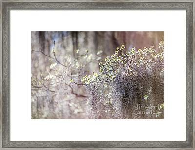 Mossy Dogwoods Framed Print by Joan McCool