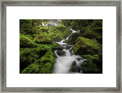 Mossy Fall #3 Framed Print