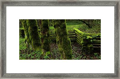 Mossy Fence Framed Print by Bob Christopher