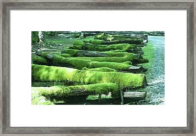 Mossy Fence Framed Print