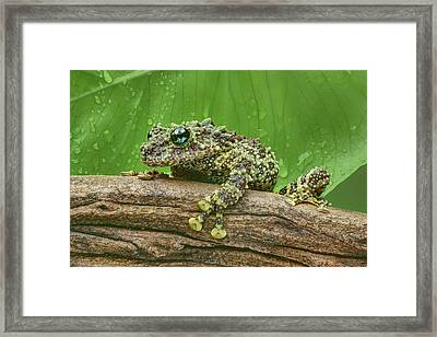 Framed Print featuring the photograph Mossy Frog by Nikolyn McDonald