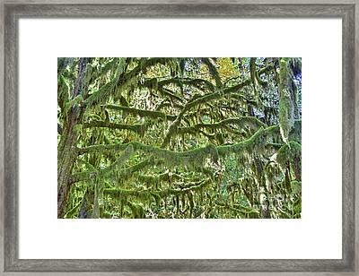 Mossy Maze Framed Print