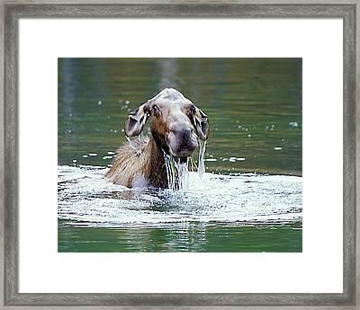 Mossy Moose Framed Print