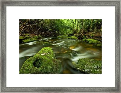Mossy Rainforest Stream Framed Print by Matt Tilghman