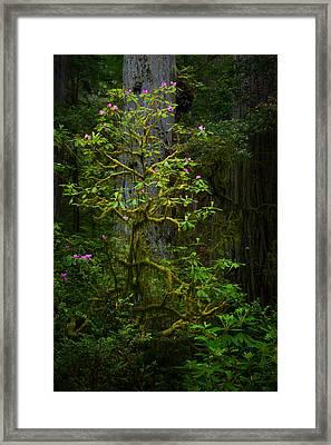 Mossy Rhododendron Framed Print by Thorsten Scheuermann