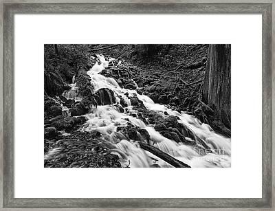 Mossy River Framed Print