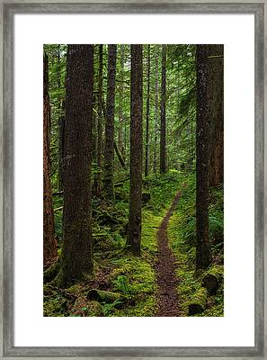 North Souixon Creek Mossy Trail Framed Print