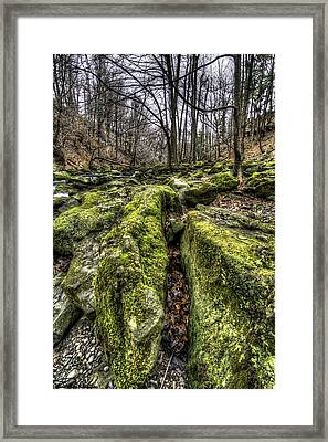 Mossy Trail Framed Print