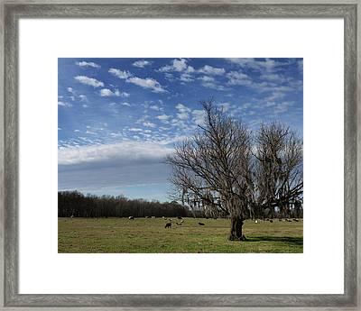 Mossy Tree Framed Print