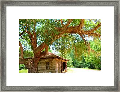 Mossy Tree In Natchez Framed Print