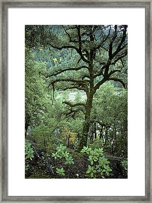 Mossy Tree On The River Framed Print by Charlie Osborn