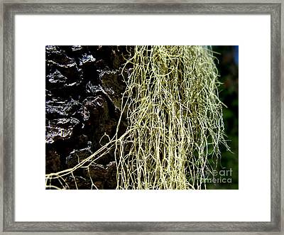 Mossy Tree Framed Print by PJ  Cloud