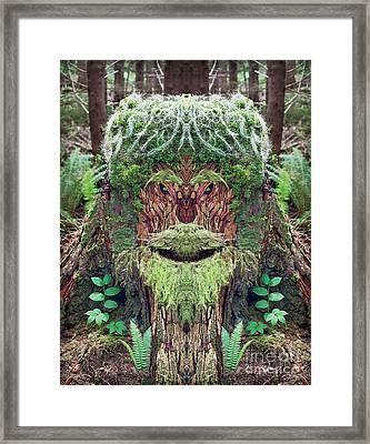 Mossman Tree Stump Framed Print by Martin Konopacki