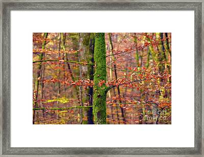 Mossy Tree Trunk Framed Print by Svetlana Sewell