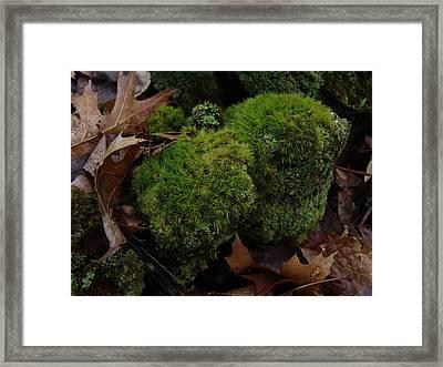 Mossy Wood 001 Framed Print by Ryan Vaal