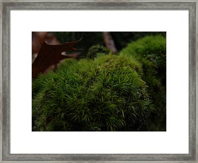 Mossy Wood 003 Framed Print by Ryan Vaal