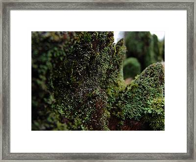 Mossy Wood 008 Framed Print by Ryan Vaal