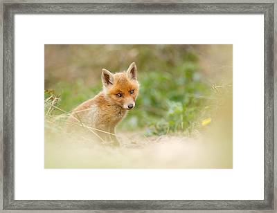 Most Beautiful Red Fox Kit In The World Framed Print by Roeselien Raimond