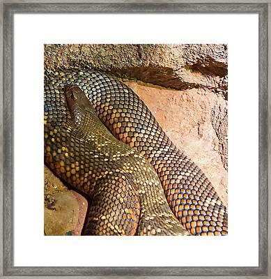 Framed Print featuring the photograph Most Venomous Snake  by Miroslava Jurcik