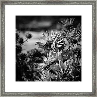 Moth And Flowers Framed Print