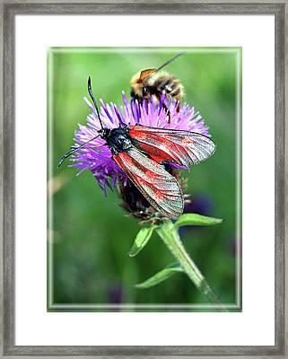 Moth Framed Print by Joy Powell