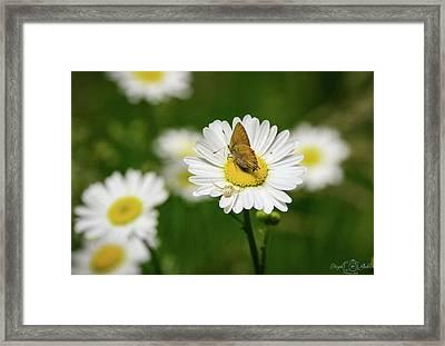 Moth Meets Spider Framed Print