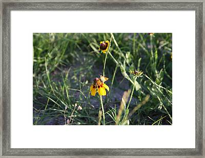 Moth On A Mexican Hat Framed Print by Jonathan Kotinek