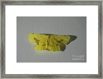 Moth On Gesso Framed Print