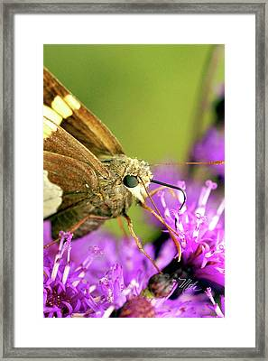 Moth On Purple Flower Framed Print