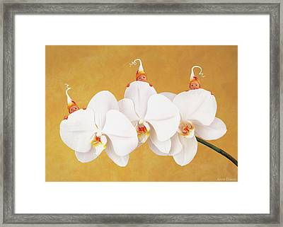 Moth Orchid Framed Print by Anne Geddes